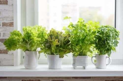 Gewürzpflanzen: 6 Tipps für einen Kräutergarten