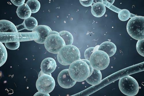 Ausfluss während-der Schwangerschaft - Candidasis-Infektion
