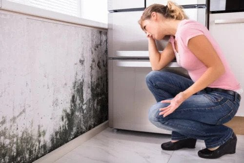 Verursacht Schimmel zu Hause gesundheitliche Probleme?