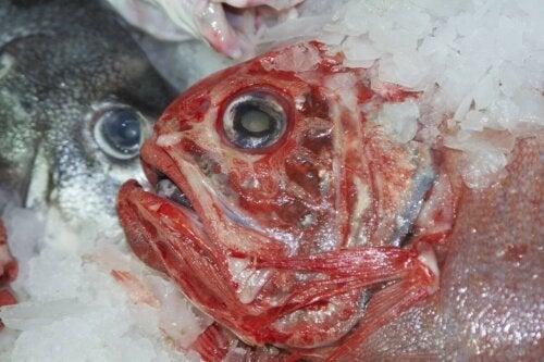 Fisch Quecksilber
