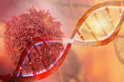 Genetische Mutationen führen dazu, dass sich Zellen unkontrolliert vermehren