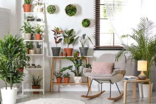 Robuste Pflanzen, die nicht viel Pflege brauchen