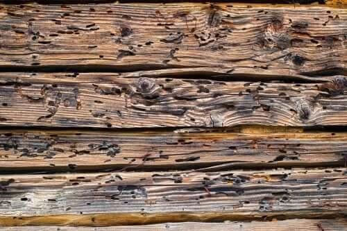 Nach einem Holzwurmbefall erscheinen Löcher in dem betroffenen Holz