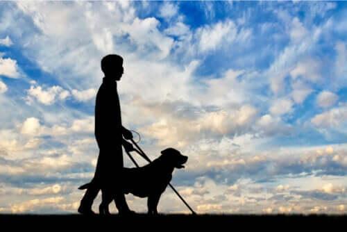 Sehbehinderung: Alles, was du wissen solltest!
