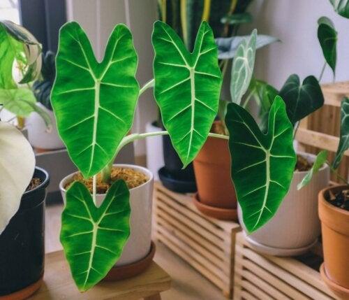 grüne und schwarze Pflanzen