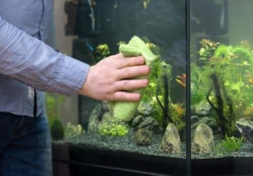 Aquarium reinigen leicht gemacht