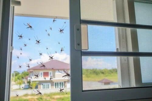 Basilikum als natürliches Mittel gegen Stechmücken