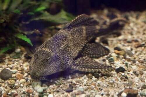 Fische in einem sauberen Aquarium