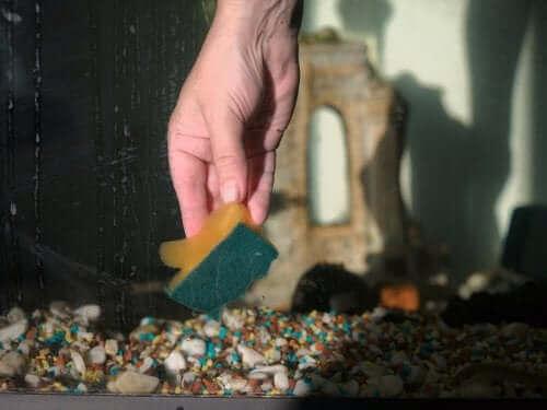 Aquarium reinigen mit Schwamm