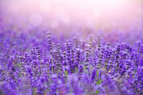 Kerzenhalter mit Lavendel