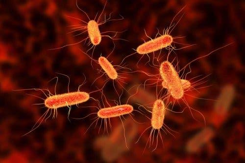 Aseptische Techniken - Nahaufnahme Bakterien