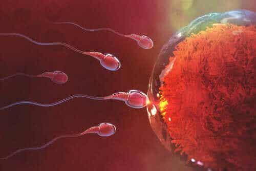 Schwanger werden nach dem Sex: So verläuft dieser Prozess