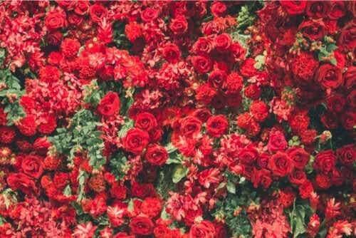 6 schöne rote Pflanzen