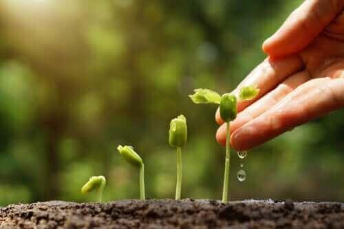 Nachhaltiger Garten: 6 wichtige Tipps
