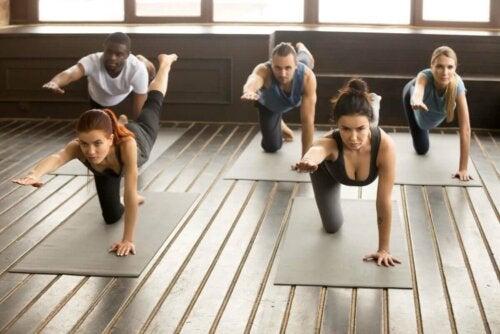 Vogel-Hund-Übung - Gruppe beim Yoga