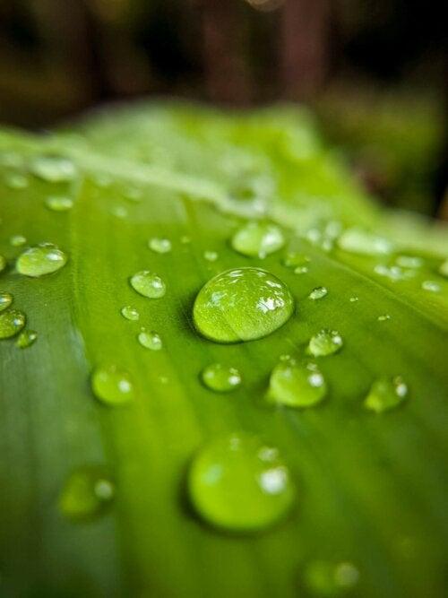 Nachhaltiger Garten - Regenwasser auf einem Blatt