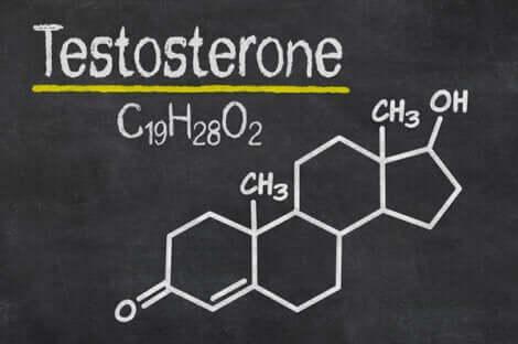 Testosteron, das männliche Sexualhormon