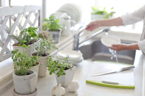Pflanzen in der Küche: Profitiere von diesen 5 Vorteilen!