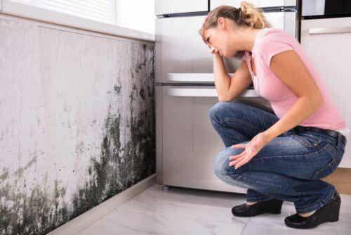 Schäden durch Feuchtigkeit - Schimmel