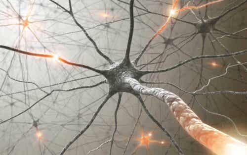 Hirnnerven - Neuronennetzwerk