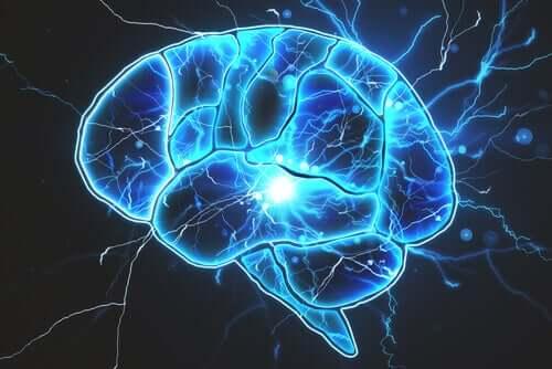 Gibt es Bakterien im Gehirn?