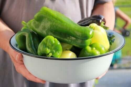 Paprika pflanzen: Tipps und Tricks für den Anbau zu Hause