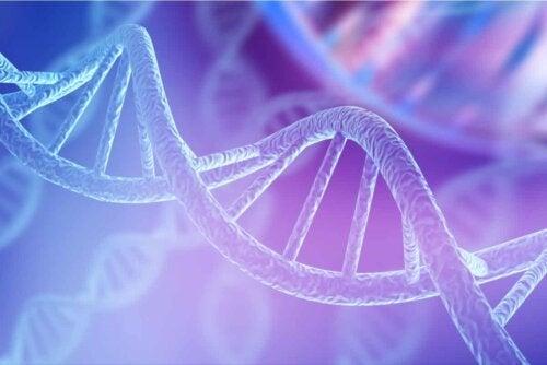 Brachydaktylie - DNA